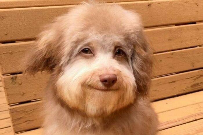 Этот пес выглядит так, как будто знает что-то нам неведомое.