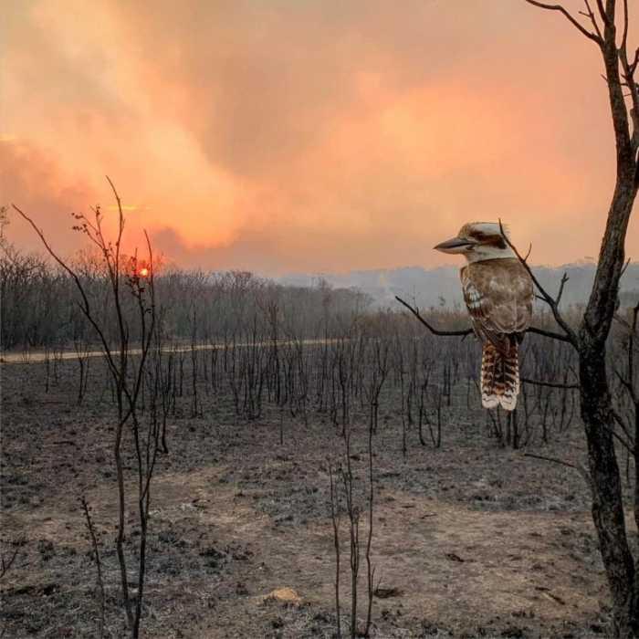 Птица на фоне голой выжженной пожаром земли.