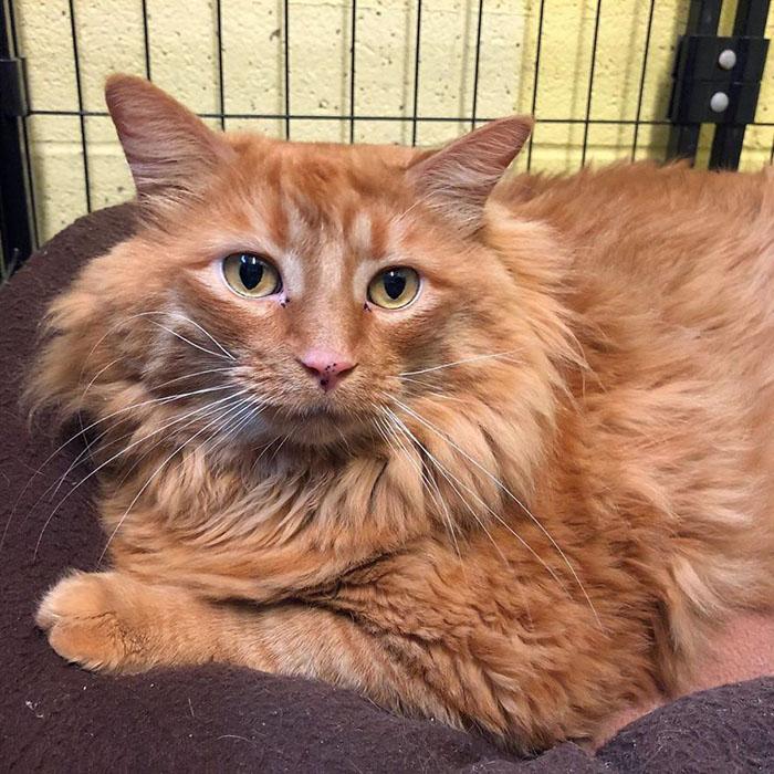 Робин считает, что такому солидному коту под стать имя римского императора.