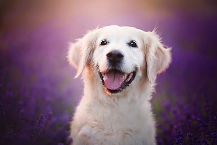 В детстве Алиша больше всего на свете мечтала о том, чтобы ей подарили собаку.