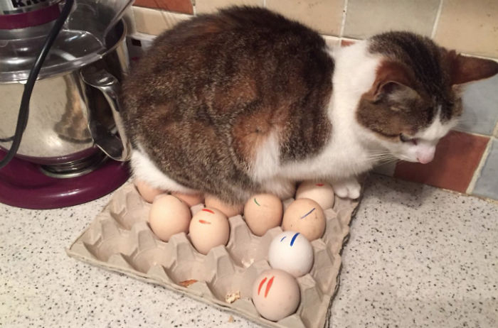 В доме пять спальных мест и десять стульев. Он сидит на яйцах.