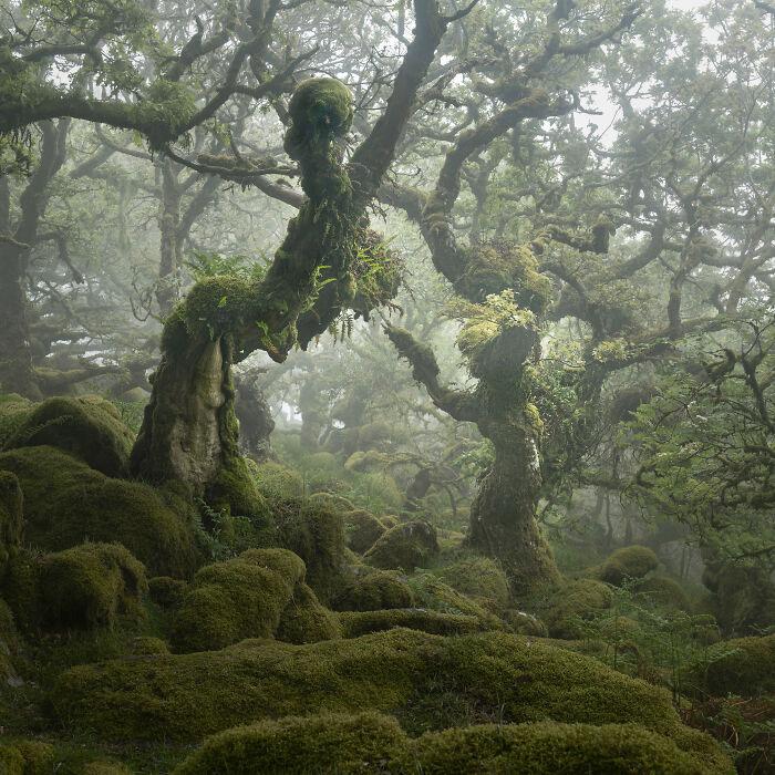 Сказочный лес. Возможно там даже можно встретить эльфа!