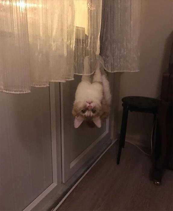 Кот-паук.