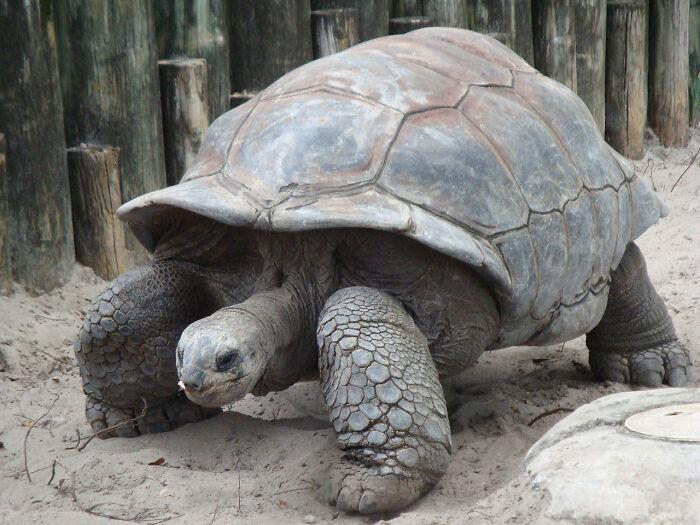 Этот вид черепах считался вымершим более века.