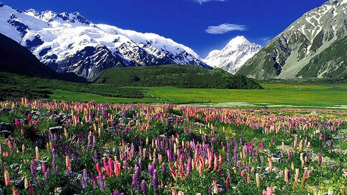 В Новой Зеландии ежи приобрели массу новых привычек.