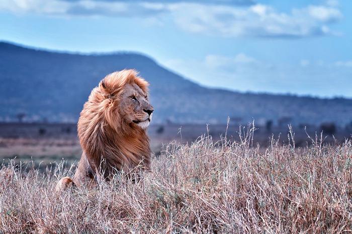 Национальный парк Серенгети, Танзания.