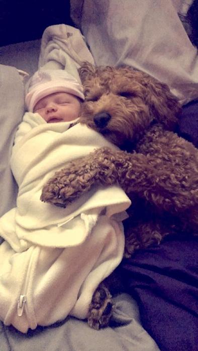 Девочка только родилась, а они с псом уже лучшие друзья.