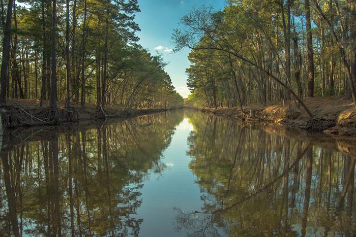 Озеро Каддо окружает прекрасный кипарисовый лес.