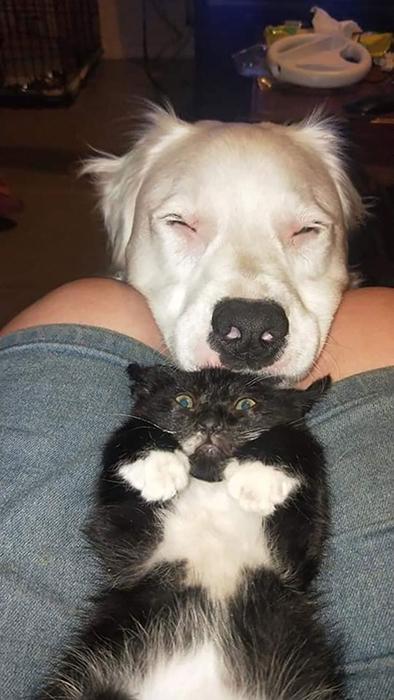 Котёнку поначалу было трудно привыкать к большому псу, который крутился возле него.
