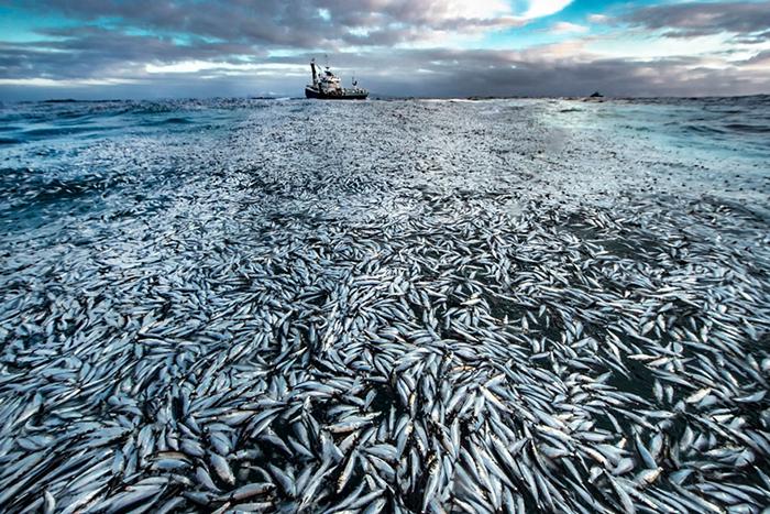 Чистый убыток. /Фото: Аудун Рикардсен (Норвегия)