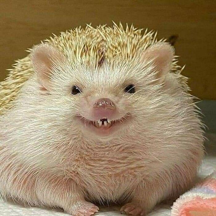 Ёжик мило улыбается?