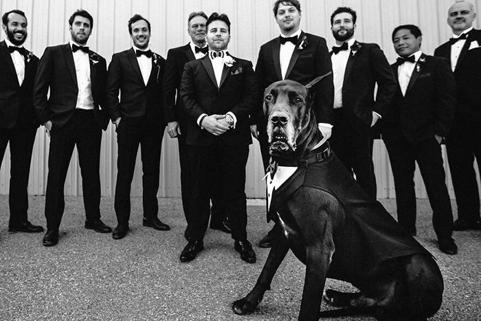 Финалист выставки портретов собак из Лос-Анджелеса.