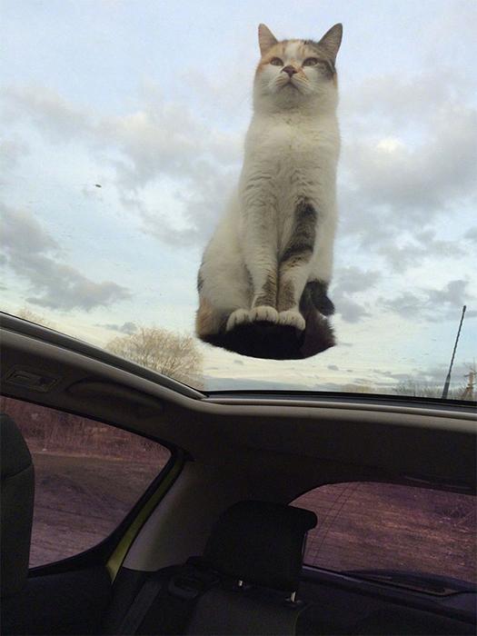 Я просто сижу на вершине мира. Или, в данном случае, на стеклянной крыше автомобиля.
