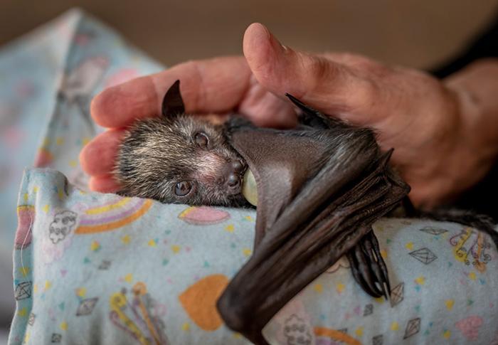 Заботливая рука. / Фото: Дуглас Гимеси (Австралия)
