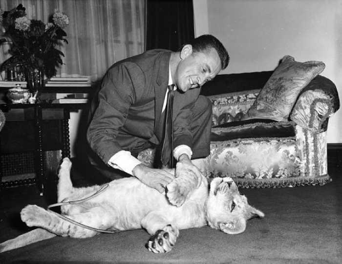 Кирк Дуглас и львёнок Спартак, которого ему подарил директор зоопарка за роль в одноимённом фильме.