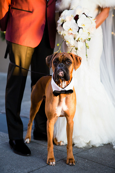 Финалист выставки портретов собак, фотография сделана La Vie Photography, Сиэтл.