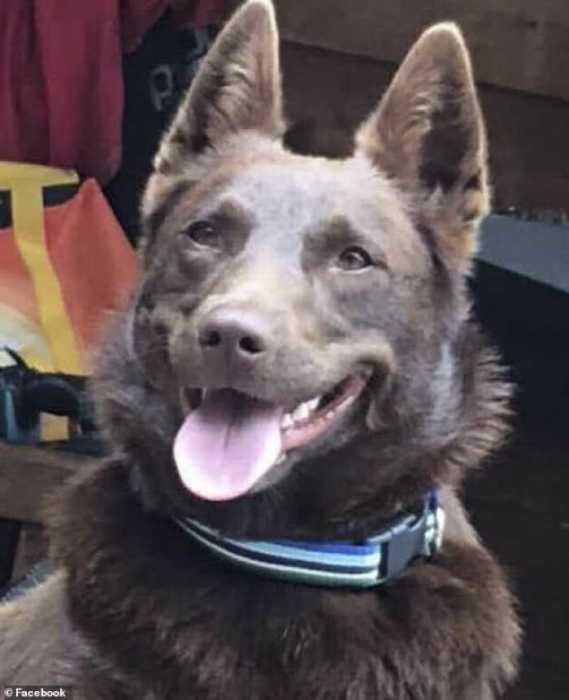 Этот пёс спрятался где-то, в то время когда эвакуировали жителей и его до сих пор не нашли.