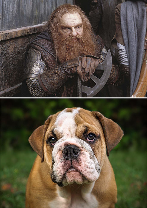 Гимли  - суров, а пёс - грустен.