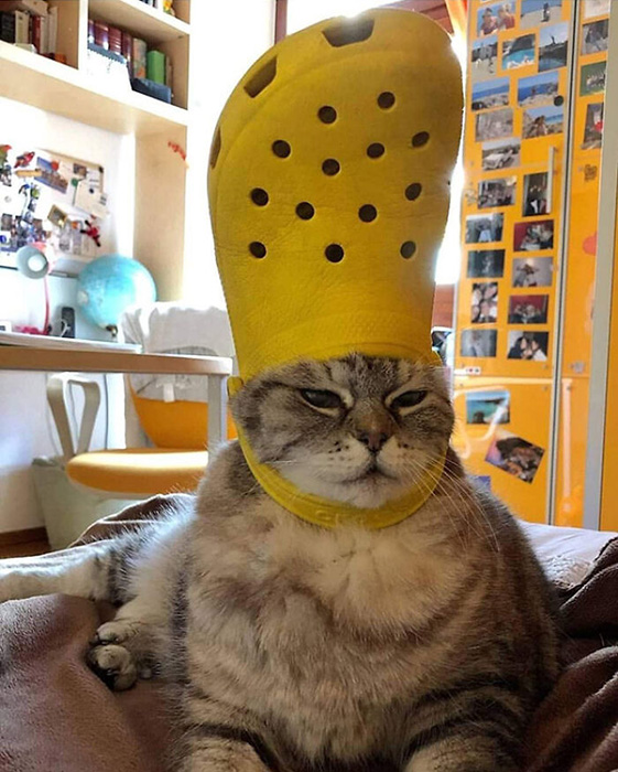 У кота здесь столь гордый и величественный вид, как-будто на голове совсем не тапок, а настоящая тиара.