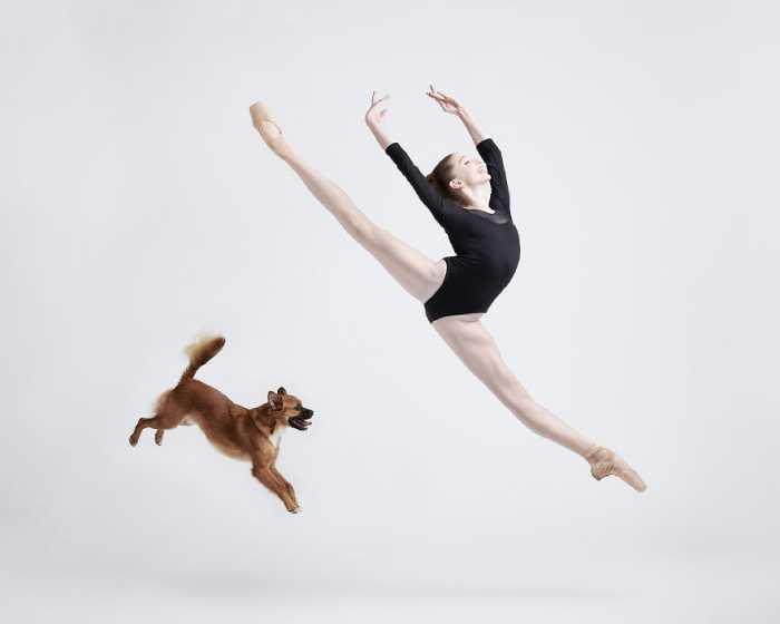 Объединить в одном кадре танцоров и собак казалось невозможным.