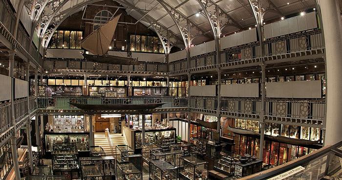 Музей естественной истории в Оксфорде. / Фото: armacad.info
