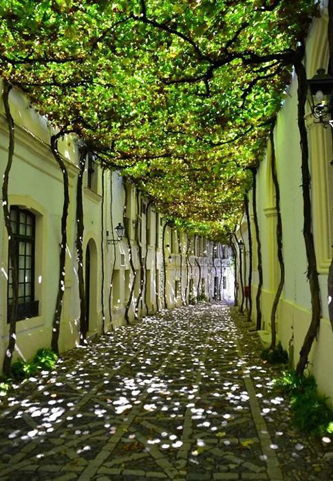 Использование природы, чтобы затенить дорожку. Херес-де-ла-Фронтера, Кадис, Испания. Фото: i.imgur.com