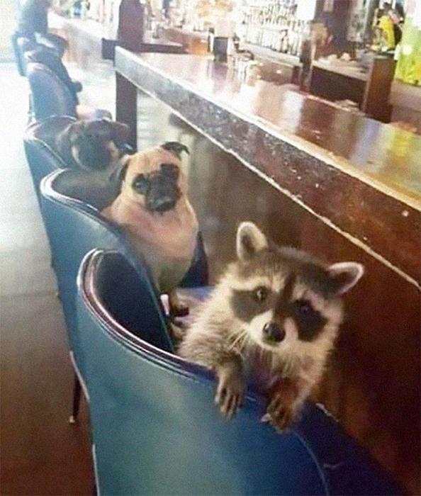 С парнями в баре после изоляции! / Фото: facebook.com/cooncore/photos