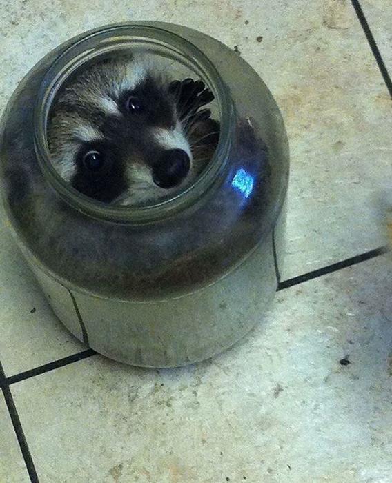 Последний огурец в банке, оглядываясь на тебя... / Фото: facebook.com/cooncore/photos