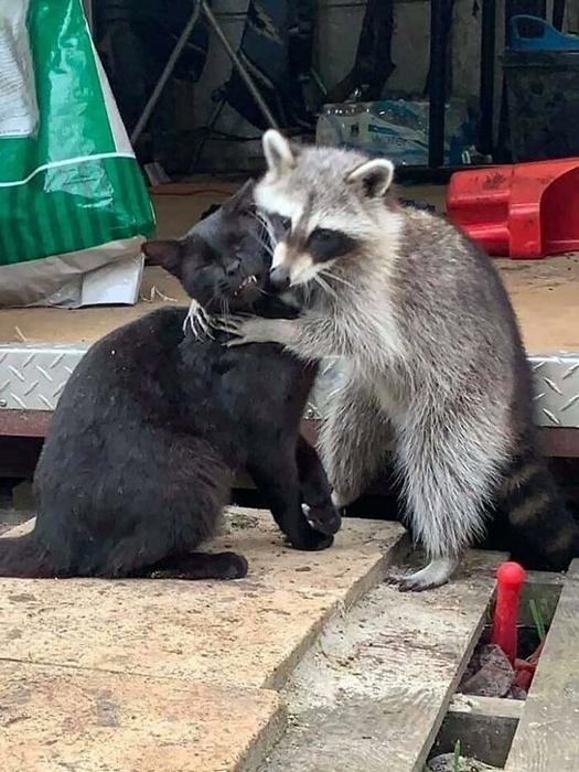 Мне всё равно что ты обо мне думаешь, я всё равно тебя люблю! / Фото: facebook.com/cooncore/photos