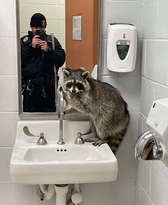 Преступник обнаружен в туалете. / Фото: facebook.com/cooncore/photos