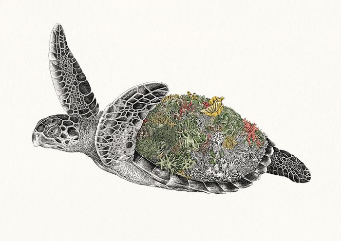 Морская черепаха Хоксбилл. / Фото: mariniferlazzo.com.au