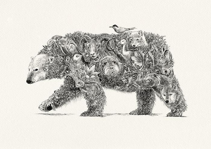 Белый медведь. Арктика. / Фото: mariniferlazzo.com.au