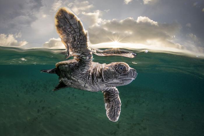 Крупный план. / Фото: Мэтти Смит/oceanphotographyawards.com