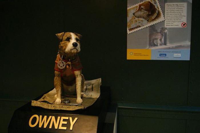 «Фальшивый Оуни» занимает место настоящей собаки на выставке на время его реставрации в Национальном почтовом музее в Вашингтоне, округ Колумбия, 21 июля 2011 г. / Фото: Getty Images