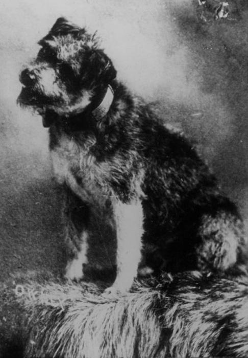 Верный почтовй пёс Оуни. / Фото: Wikimedia Commons
