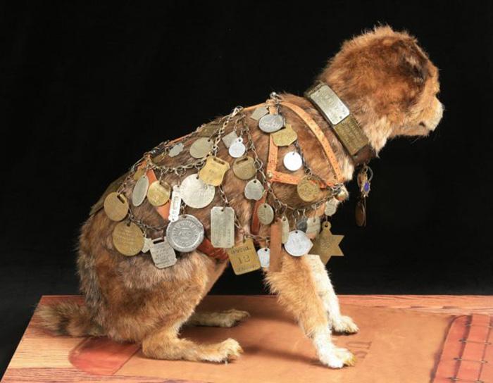 Недавно была проведена реставрация чучела знаменитой собаки. / Фото: Wikimedia Commons