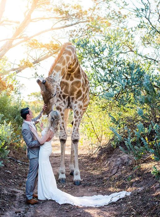 У пары неожиданный гость на свадебной церемонии, состоявшейся в южноафриканском заповеднике. / Фото: reddit.com