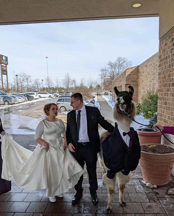 5 лет назад он пообещал сестре, что привезёт ламу на её свадьбу. Похоже она не очень рада тому, что брат хозяин своего слова. / Фото: reddit.com