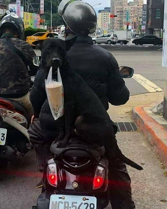 Покупка в надёжных руках! Или зубах! / Фото: instagram.com