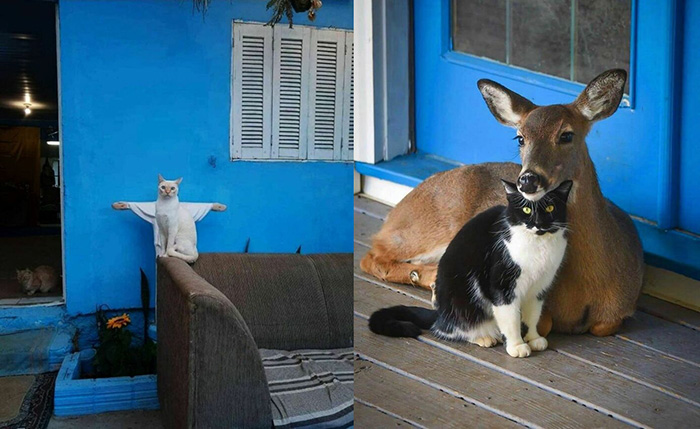 Каждый владелец кошки знает: их питомец считает себя святым.