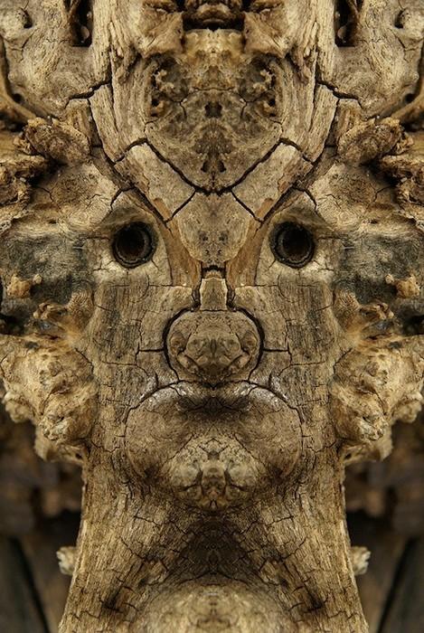 Древесные существа в проекте Dream Creatures