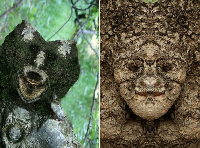 Духи деревьев, живущие в лесу