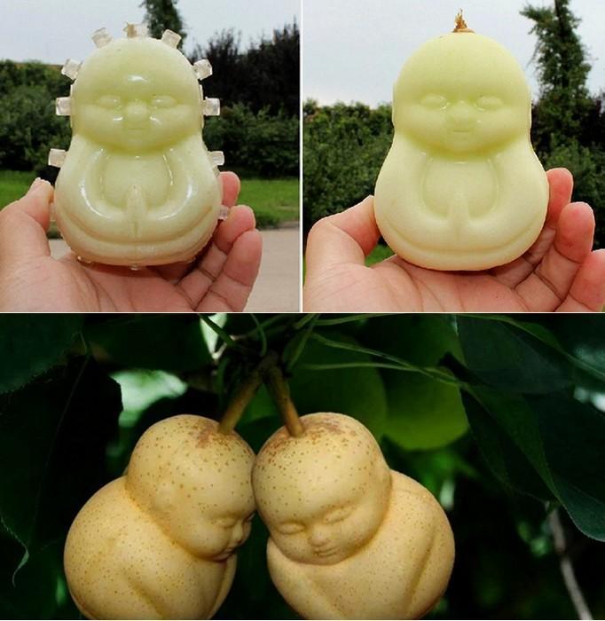 Необычная форма китайских груш