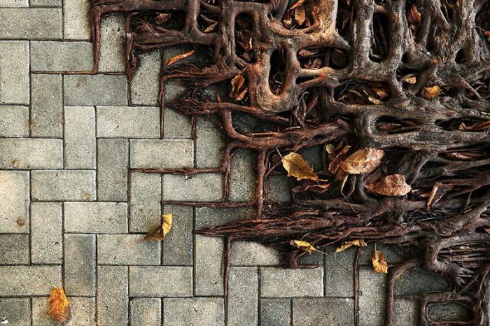 Прорастая корнями.