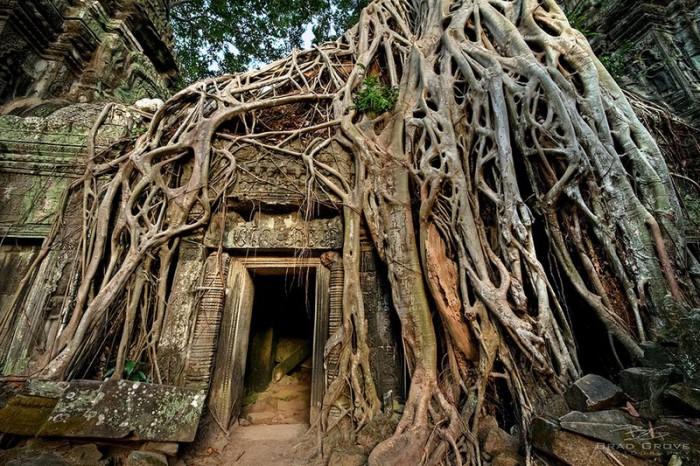 Храм Та-Пром, Ангкор, Камбоджа.