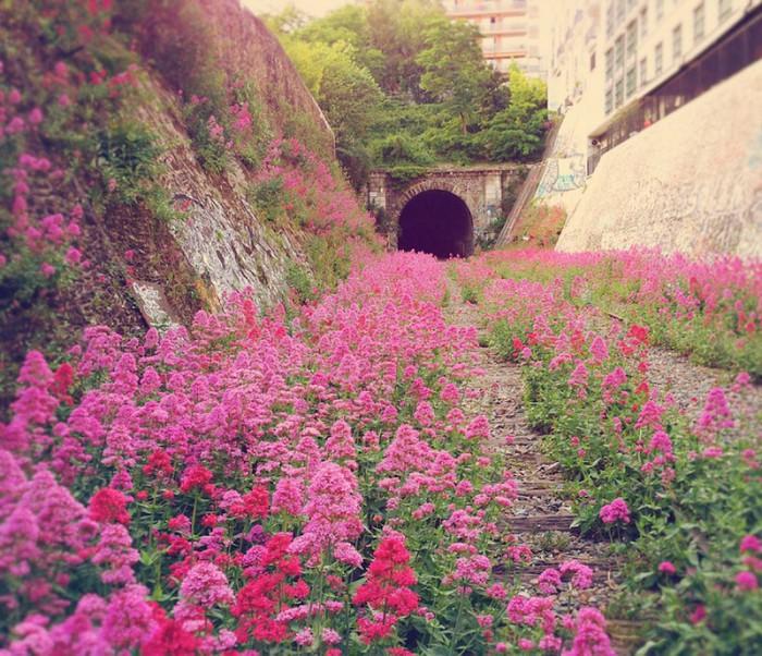 Заброшенная железная дорога в Париже.