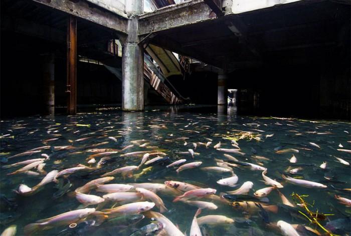 Заброшенный торговый центр захвачен рыбой. Бангкок.