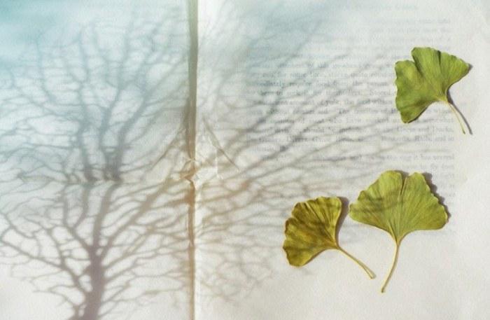 Танец ветра или полет листьев.