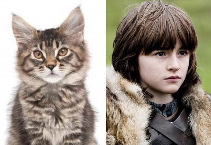 Полугодовалый котенок познающий мир, такой же наивный и юный, как и Бран.