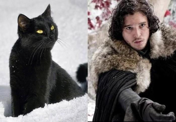 Очаровательный черный кот, рассмотрел в Джон Сноу своего двойника.